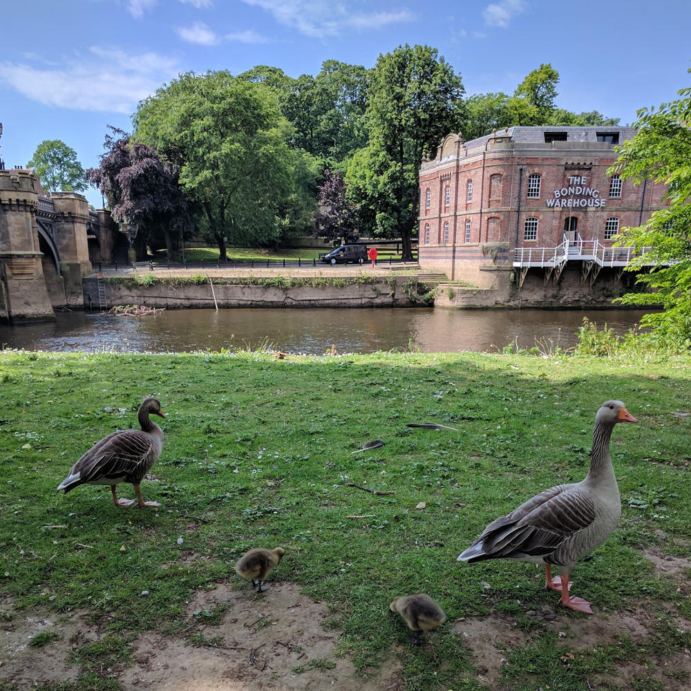 York river wildlife